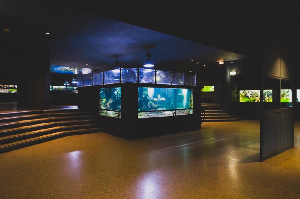 Aquarium - Palais Porte Dorée