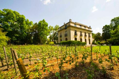 vigne bagatelle
